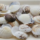 Beach Theme Shell Decorative Accessories (50 Pieces)