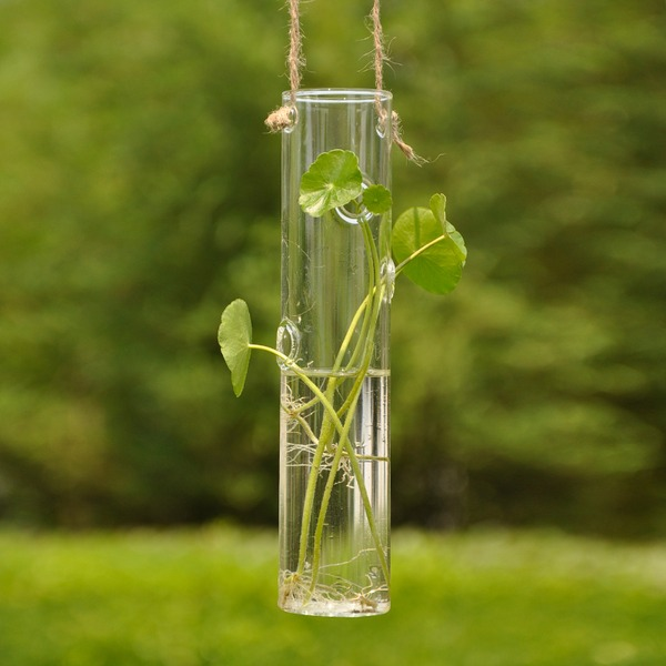 Vase Glass Elegant Hanging Table Centerpieces